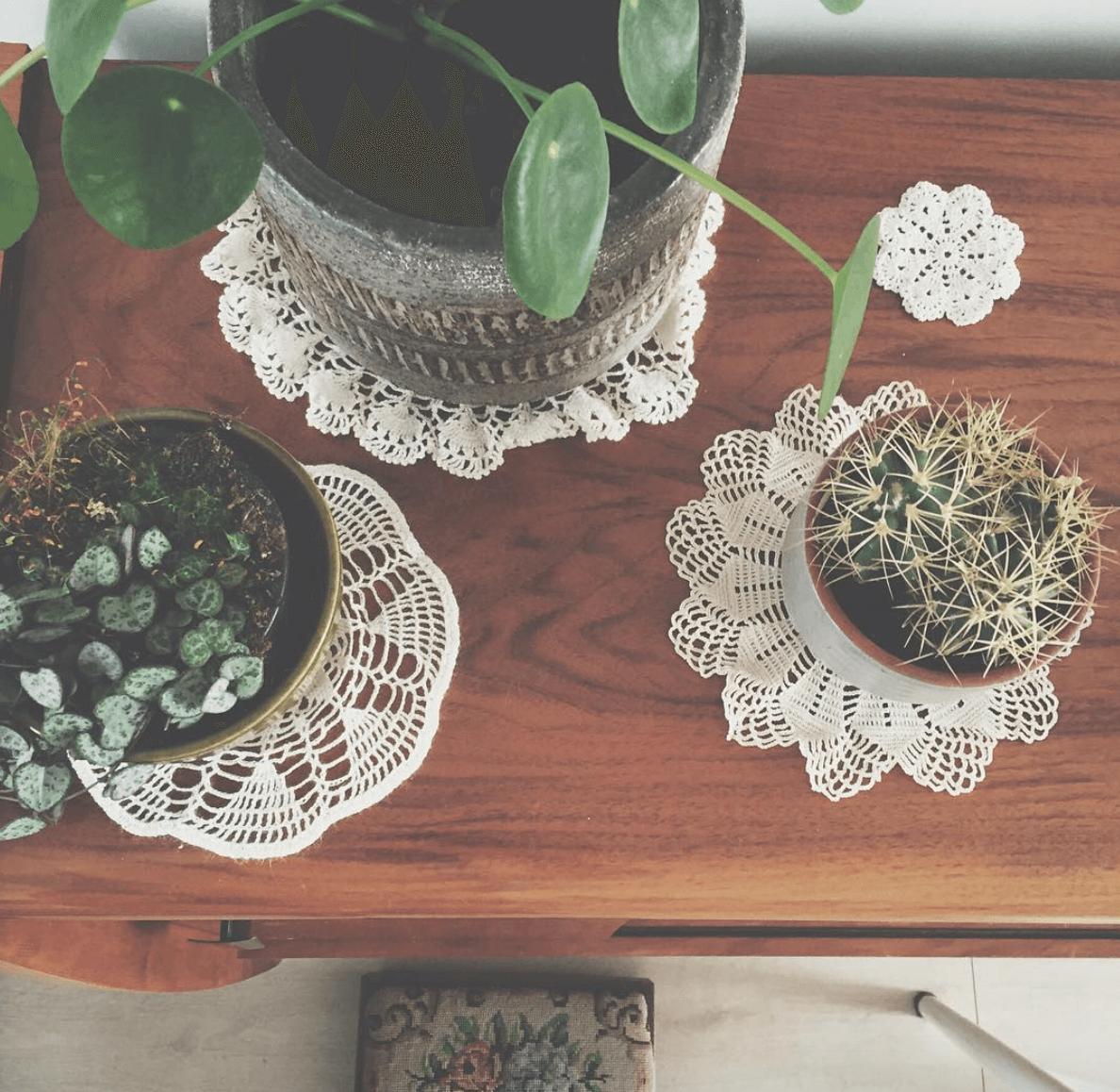 verliebt in eine pflanze die pileapeperomioides auch bekannt als ufopflanze bzw chinesischer. Black Bedroom Furniture Sets. Home Design Ideas