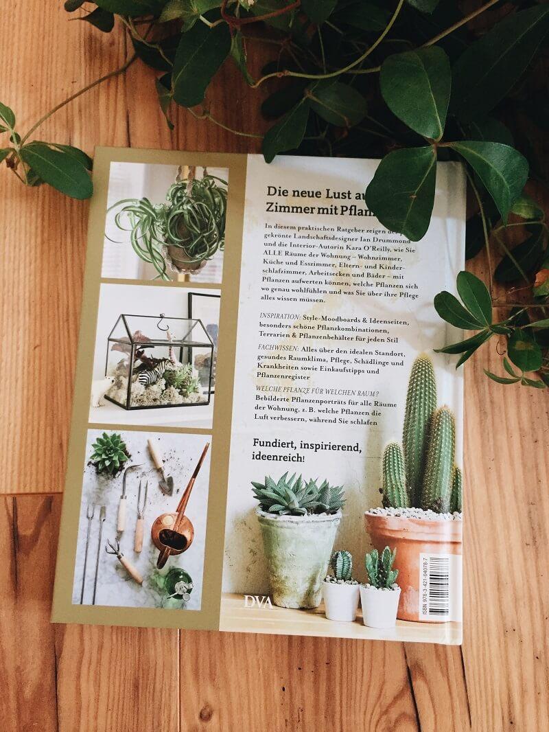 Zimmer mit Pflanze