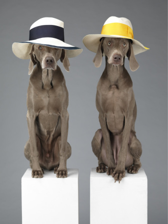 william-wegman_5