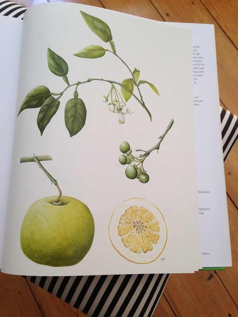 botanische Illustration andrew brown
