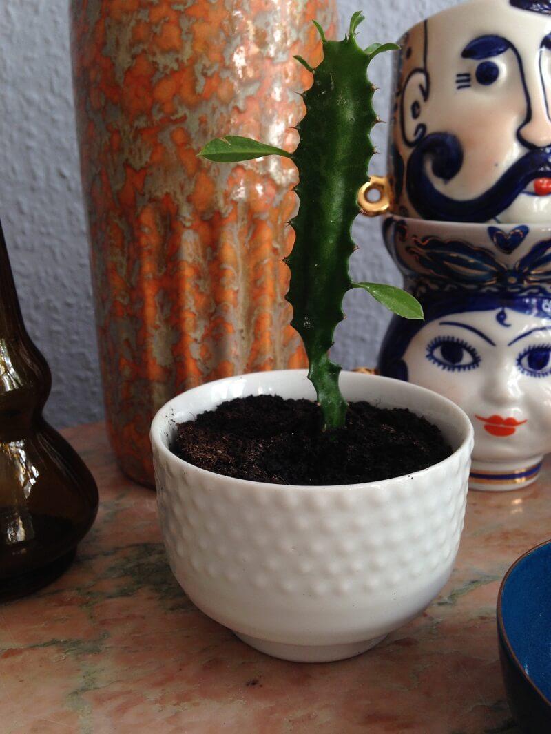 kaktus keramik