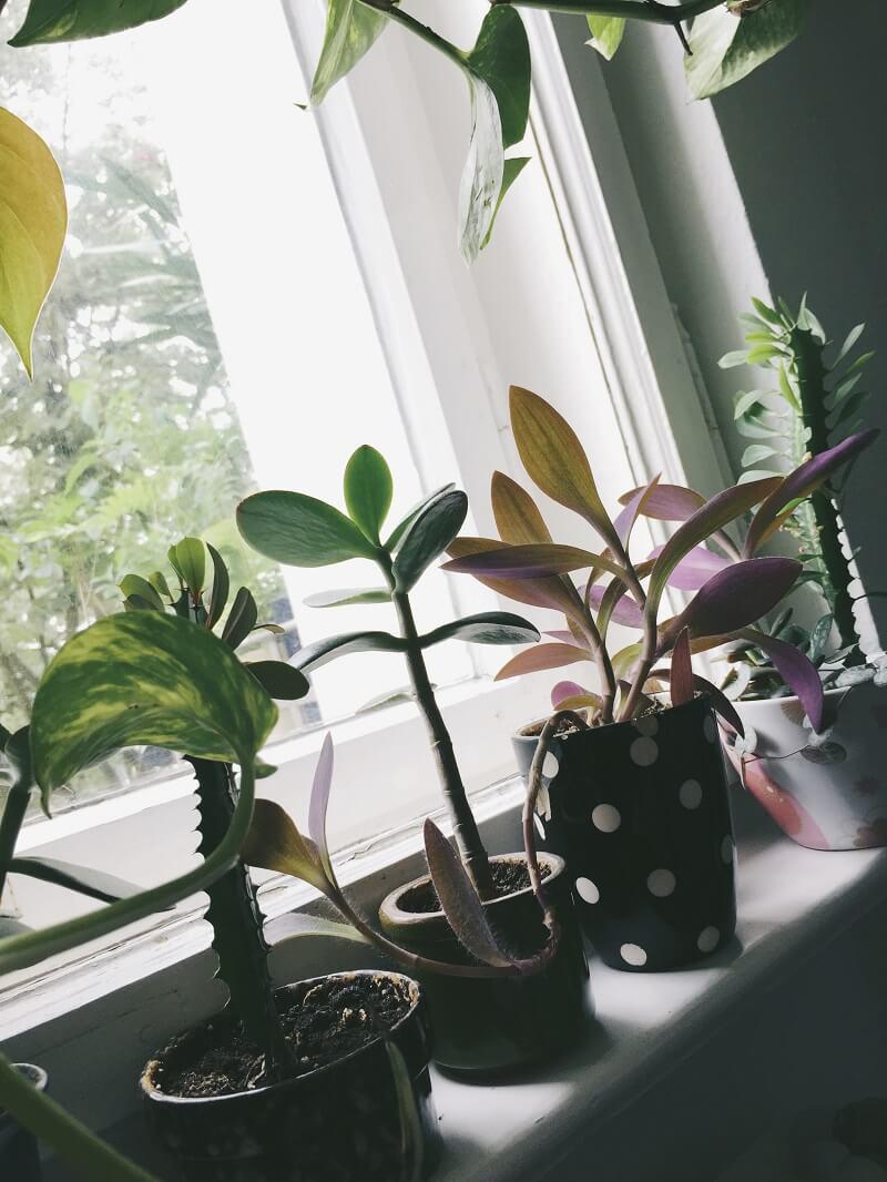 Selbst gezogener mini Dschungel