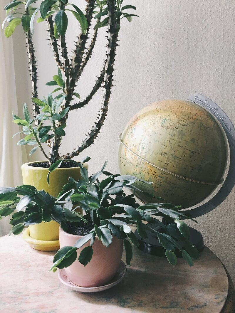 Zimmerpflanzen in Szene setzen