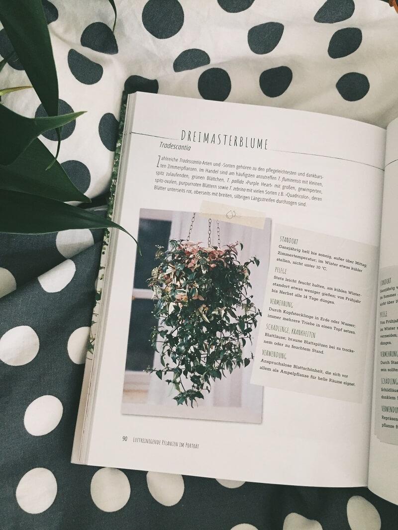 Saubere Luft mit Zimmerpflanzen von Ursula Kopp